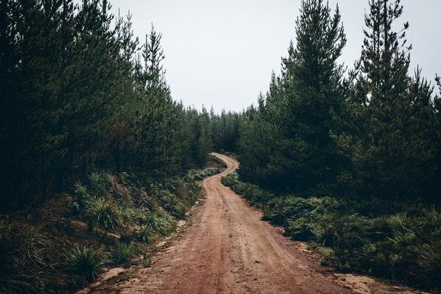 groupement forestier investissement