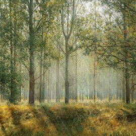 Qu'est-ce qu'un groupement forestier d'investissement?