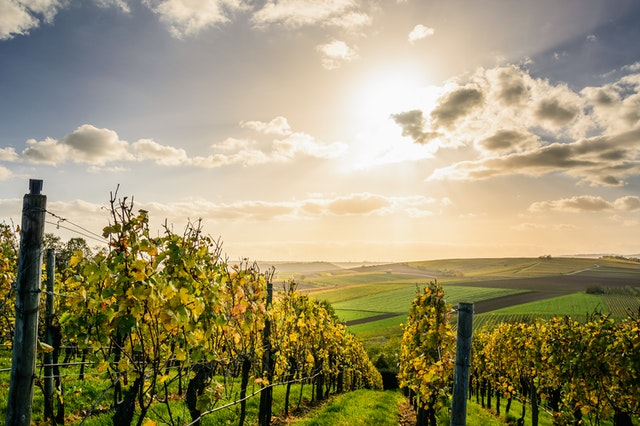 investir dans un groupement viticole